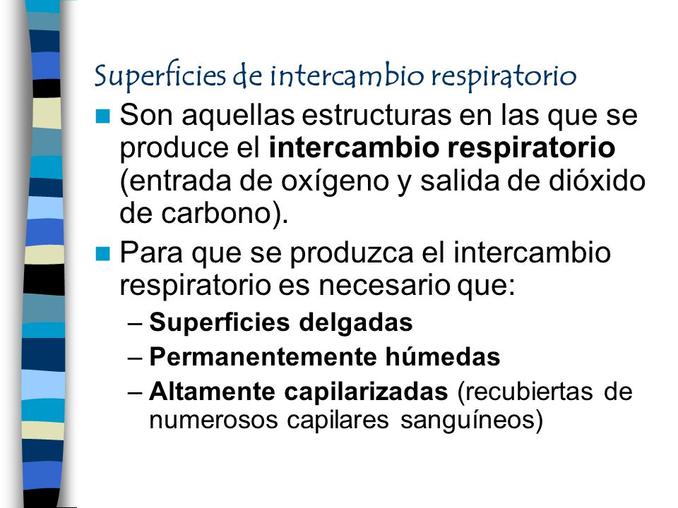 Superficies de intercambio respiratorio