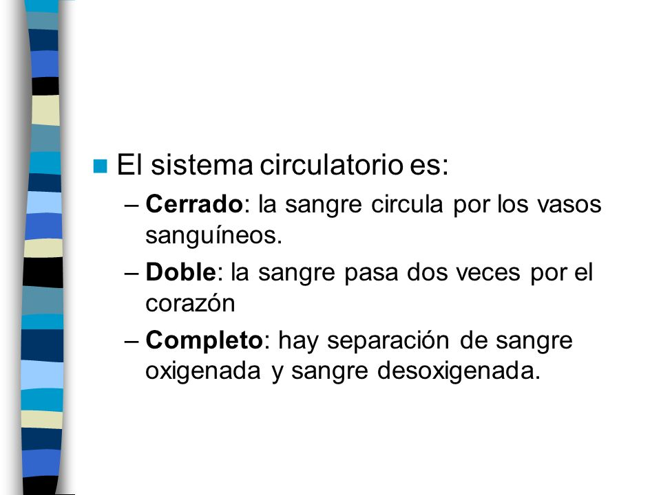 El sistema circulatorio es:
