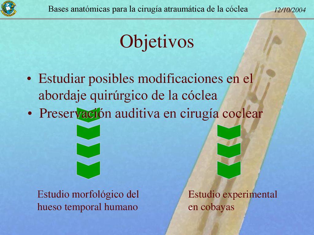 Bases anatómicas para la cirugía atraumática de la cóclea - ppt ...