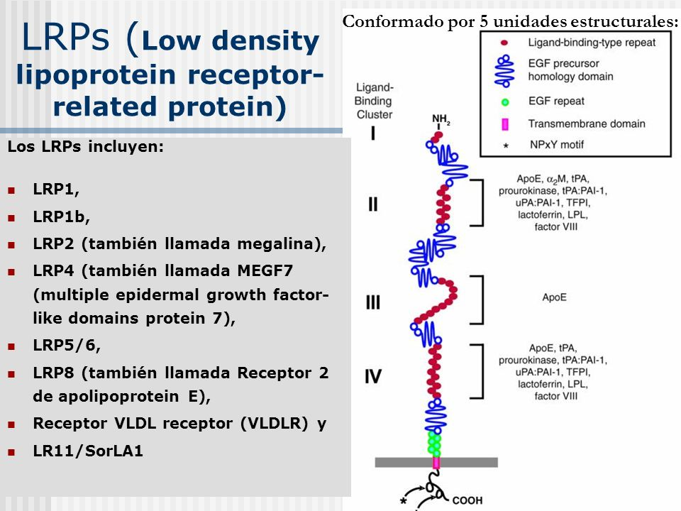 LRPs (Low density lipoprotein receptor-related protein)