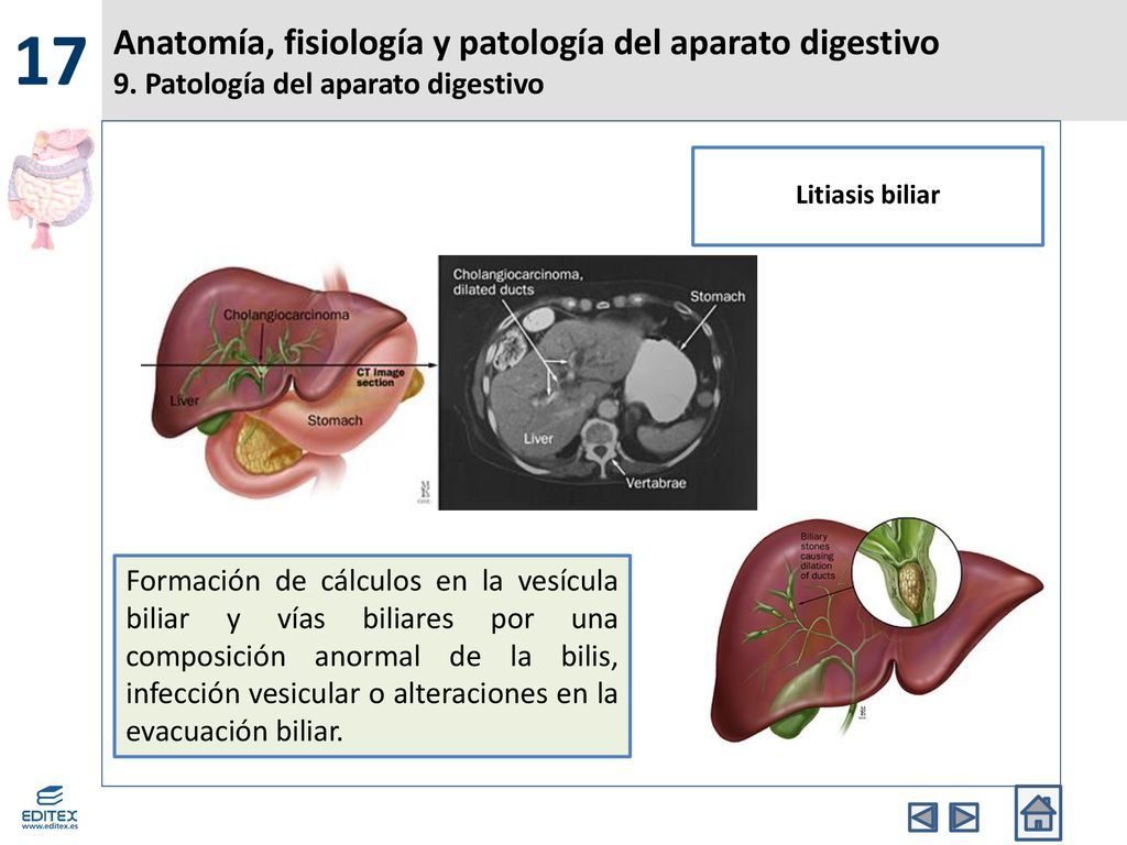 Anatomía, fisiología y patología del aparato digestivo - ppt descargar
