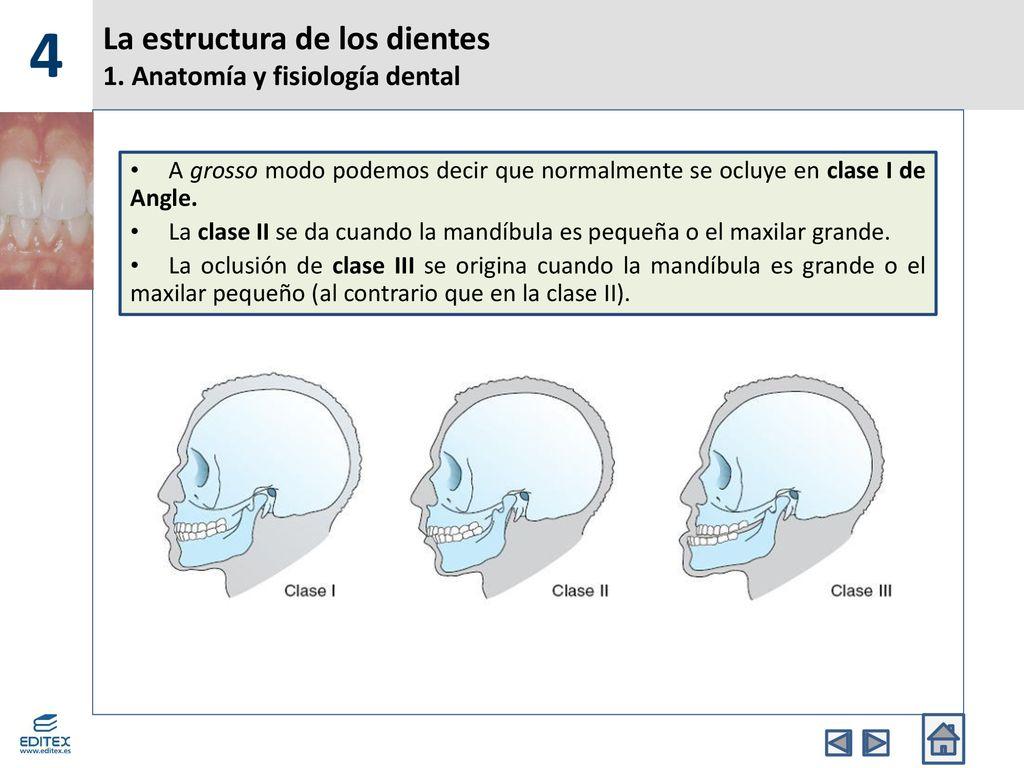 La estructura de los dientes - ppt descargar