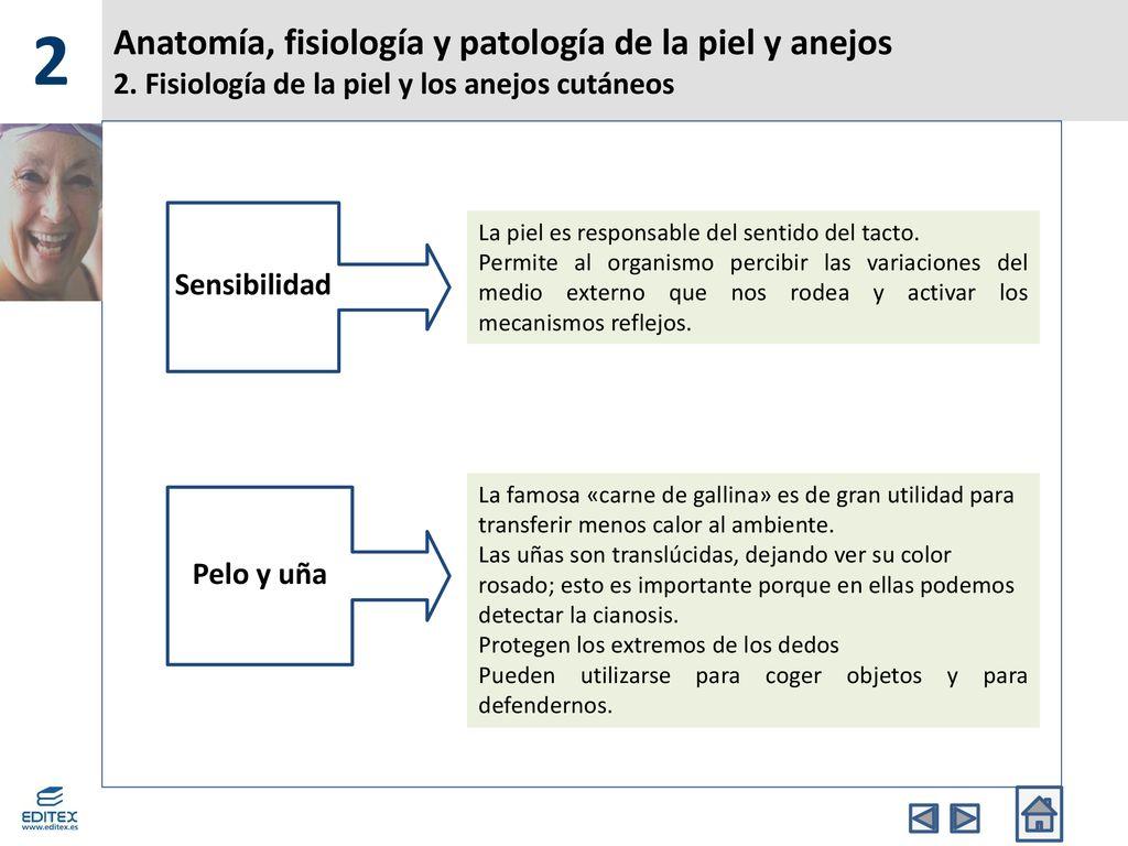 Anatomía, fisiología y patología de la piel y anejos - ppt descargar