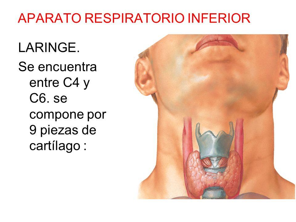 APARATO RESPIRATORIO SUPERIOR: - ppt video online descargar