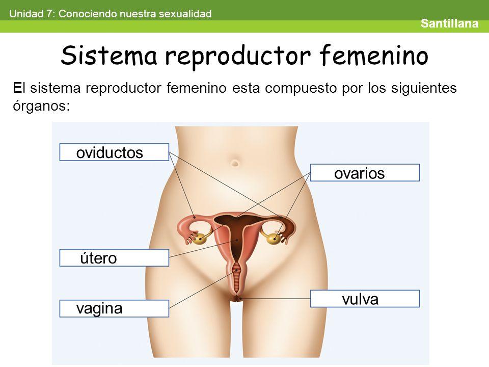 Fantástico Vigina Femenina Ideas - Imágenes de Anatomía Humana ...