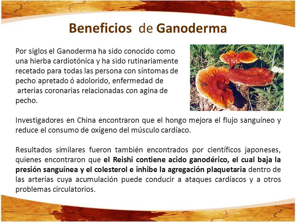 Ganoderma Lucidum Beneficios