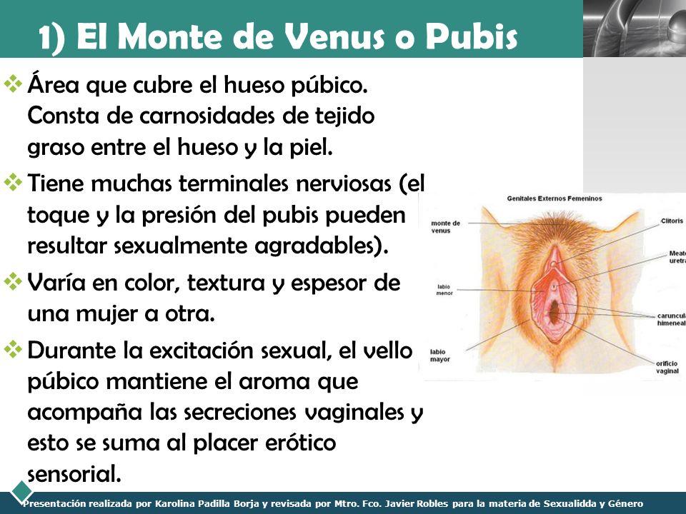 Anatomía y Fisiología Sexual Femenina - ppt video online descargar