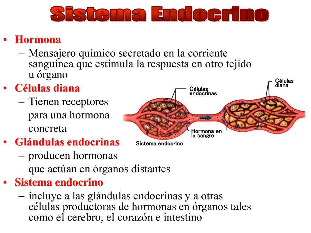Anatomía y Fisiología del Sistema Endocrino. - ppt descargar