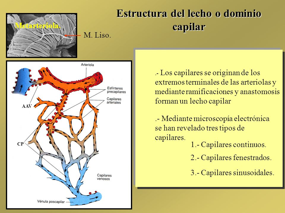 SISTEMA CIRCULATORIO. - ppt descargar