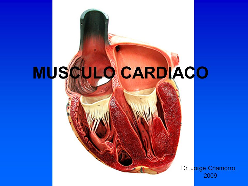 MUSCULO CARDIACO Dr. Jorge Chamorro. 2009