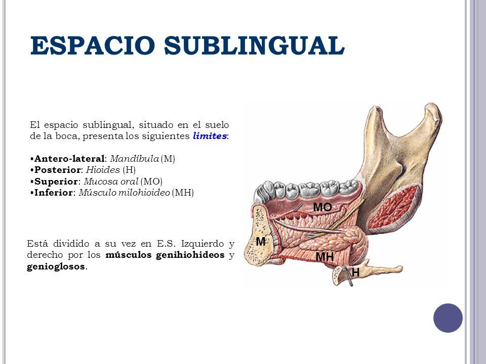 ESPACIO SUBLINGUAL. - ppt descargar