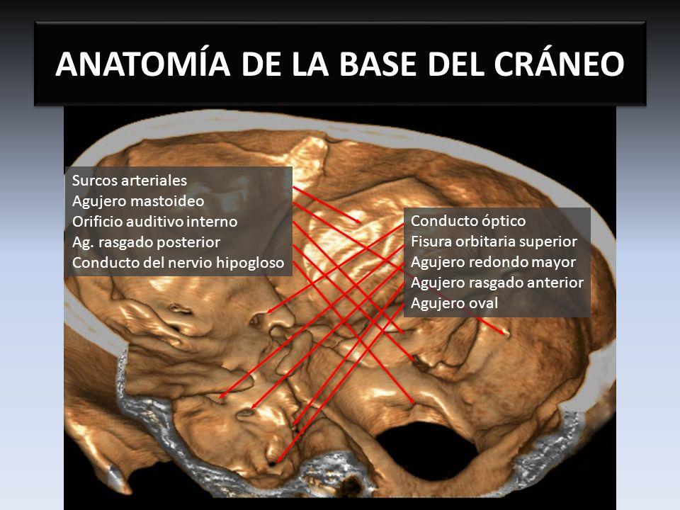 ANATOMÍA DE LA BASE DEL CRÁNEO - ppt video online descargar