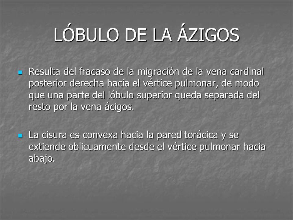 TÓRAX PULMÓN MEDIASTINO Lóbulo de la ázigos (5/222, 2.25%) - ppt ...