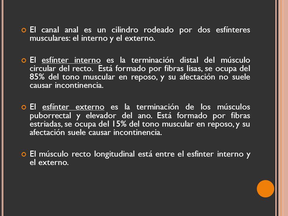 Hermosa Anatomía De La Región Anorrectal Festooning - Imágenes de ...