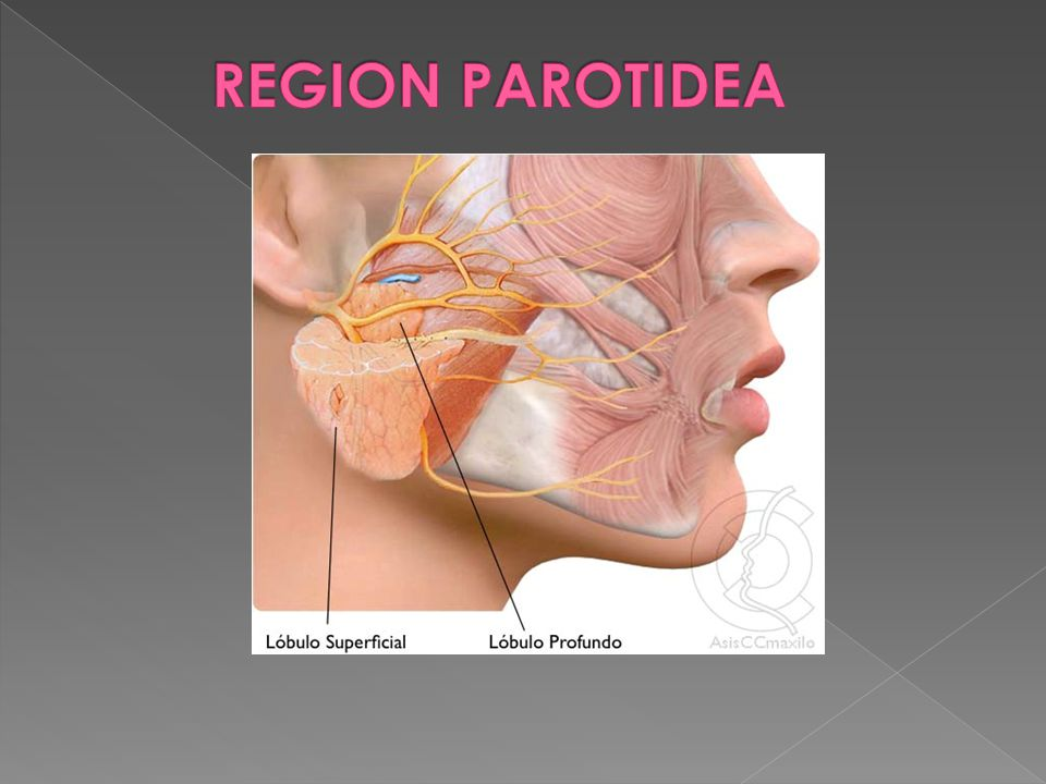 REGION PAROTIDEA REGION PAROTIDEA: Comprende la glándula parótida y ...