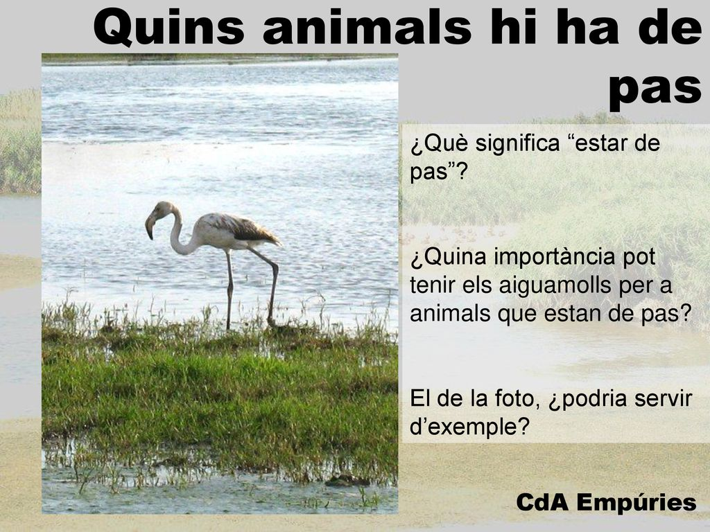 Quins animals hi ha de pas