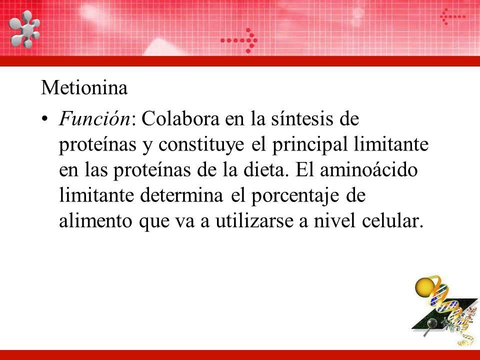 Aminoácidos Lic Raúl Hernández M Ppt Video Online Descargar