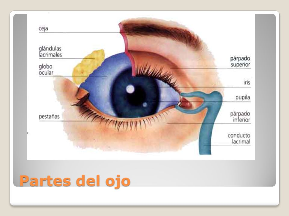 FISIOLOGIA DE LA VISION - ppt video online descargar