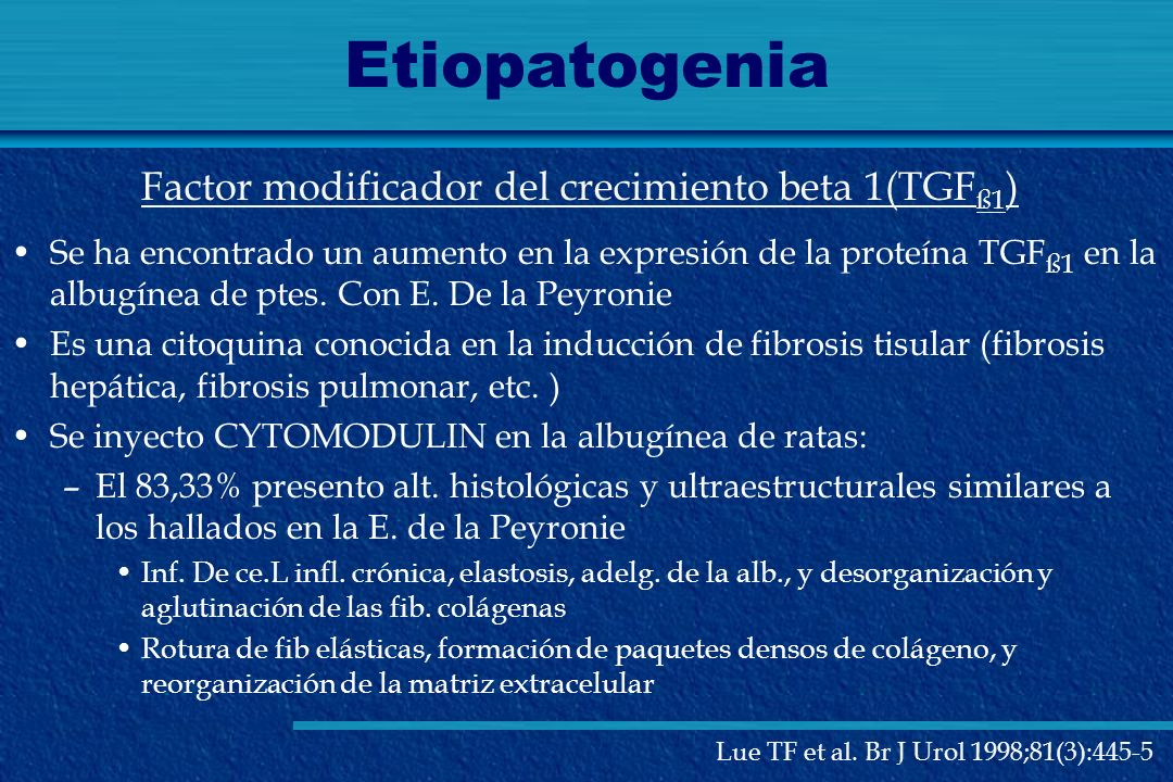 Etiopatogenia Factor modificador del crecimiento beta 1(TGFß1)