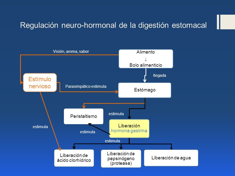 Regulación neuro-hormonal de la digestión estomacal