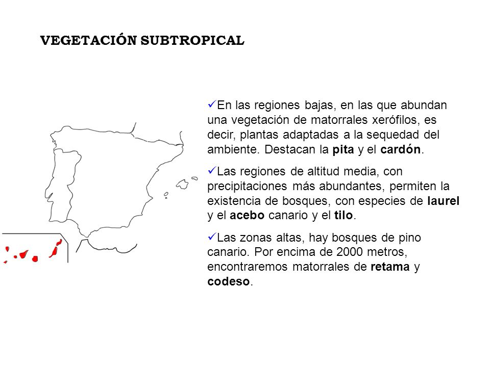 VEGETACIÓN SUBTROPICAL