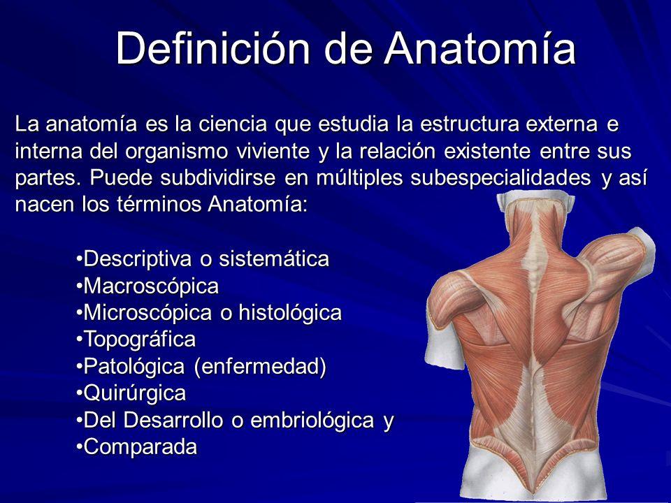 Definiciones Anatómicas Ejes y Planos de Construcción - ppt video ...