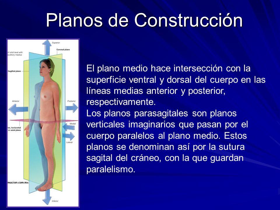 Asombroso Definición De Los Planos Anatomía Colección de Imágenes ...