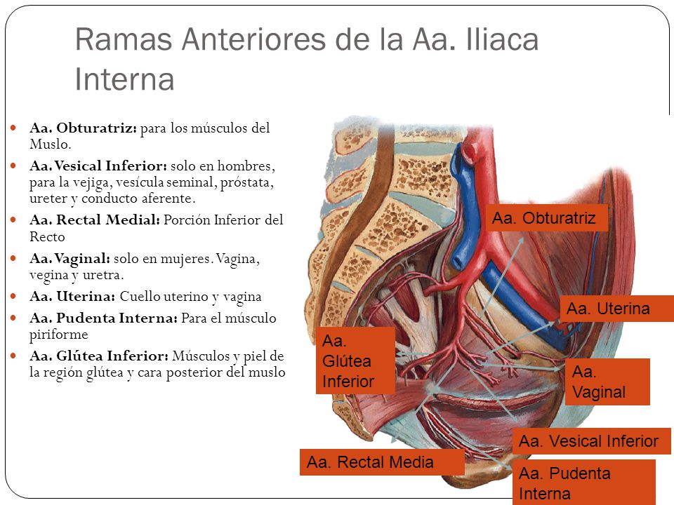 Sistema Arterial y Venoso - ppt video online descargar
