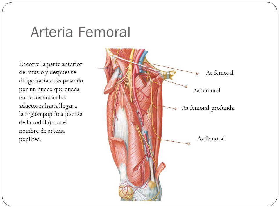 Sistema Arterial y Venoso - ppt video online descargar