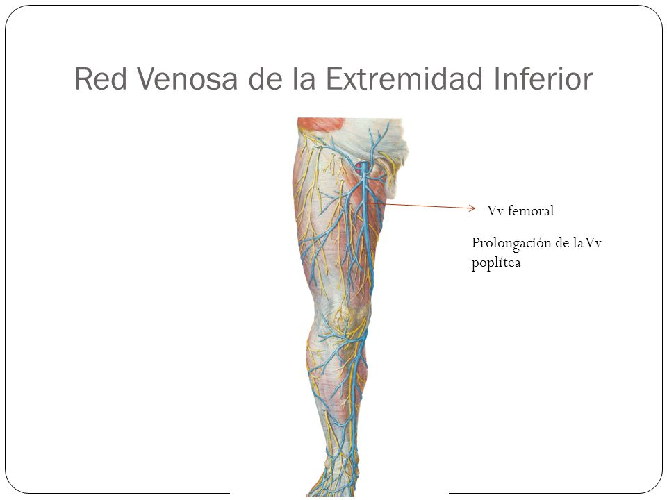Increíble Anatomía Venosa De Las Extremidades Superiores Bandera ...