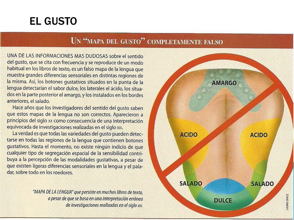 EL GUSTO Y EL OLFATO. - ppt descargar