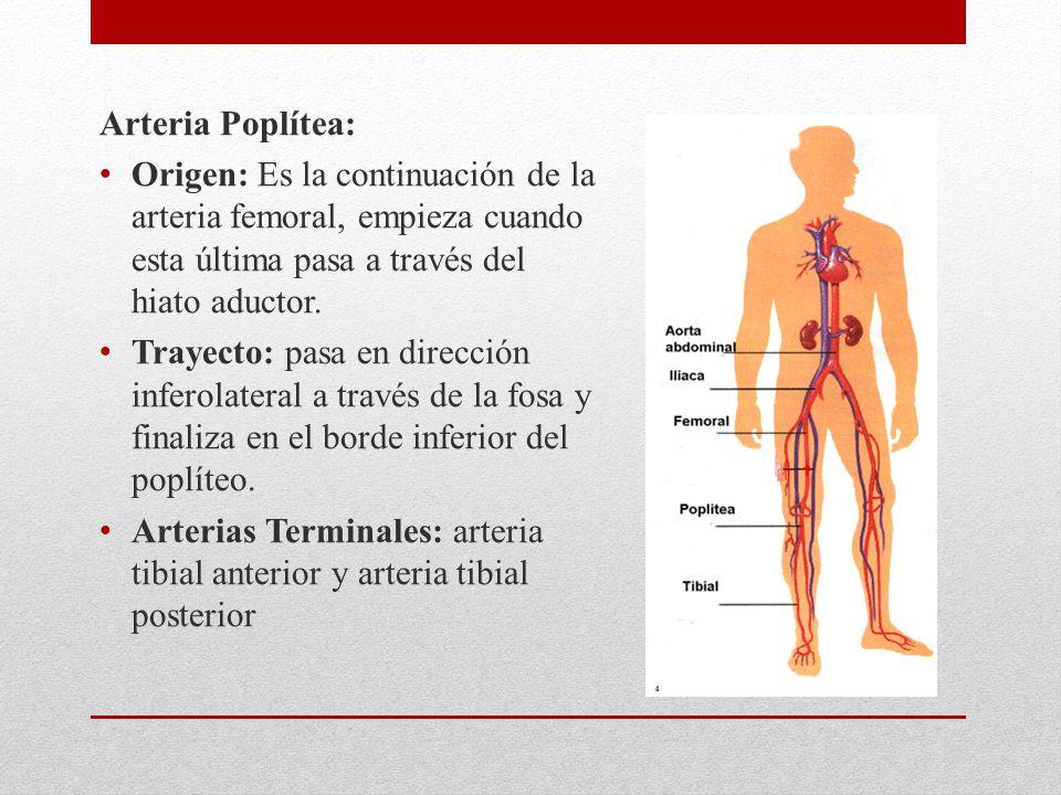 Sistema Arterial y Sistema Venoso Mayor - ppt descargar