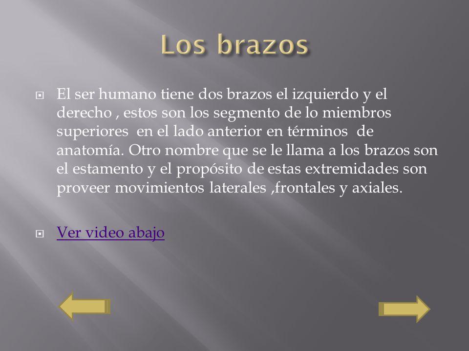 Osteología y Histología - ppt video online descargar