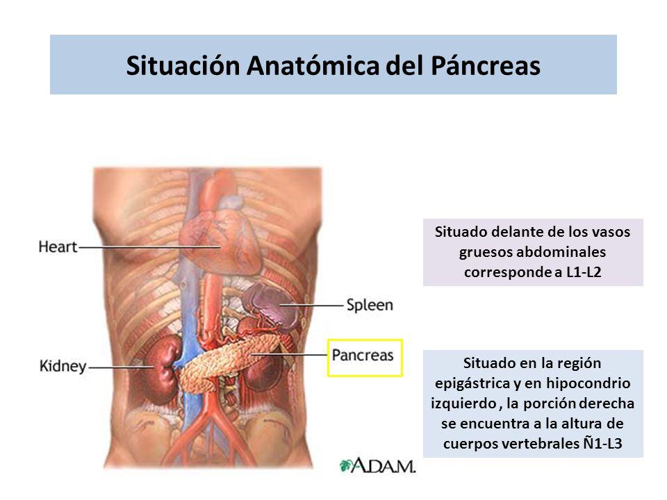 Anatomía y Fisiología de - ppt descargar