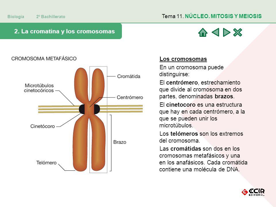 11 Biología Ii 2º Bachillerato Estructura Y Función Celular