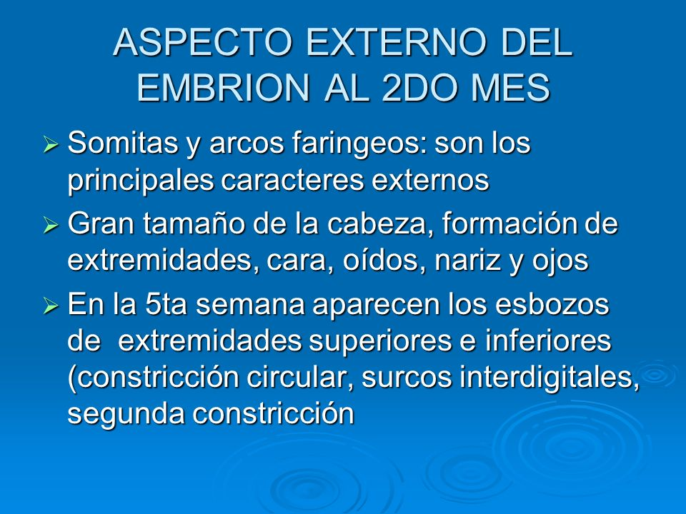 ASPECTO EXTERNO DEL EMBRION AL 2DO MES