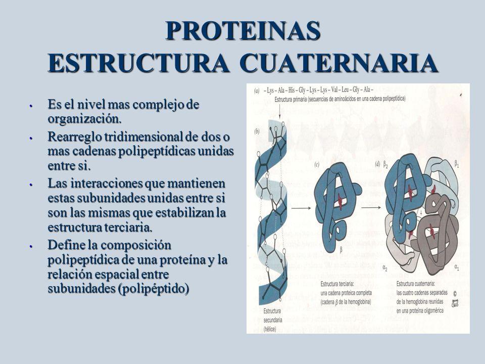 Biomoleculas Proteinas Macromoleculas Mas De 10 000