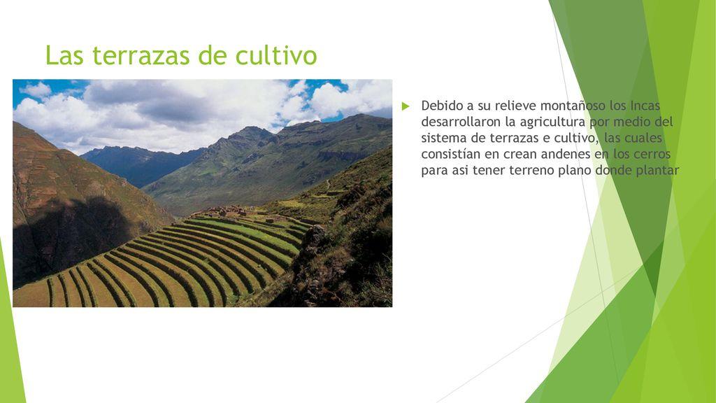 Unidad Iii El Mundo Andino Y La Civilización Inca Ppt