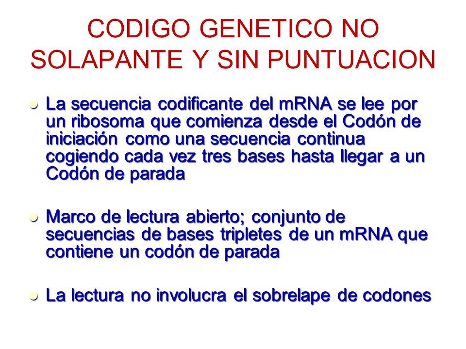 CODIGO GENETICO SINTESIS PROTEICA. - ppt video online descargar