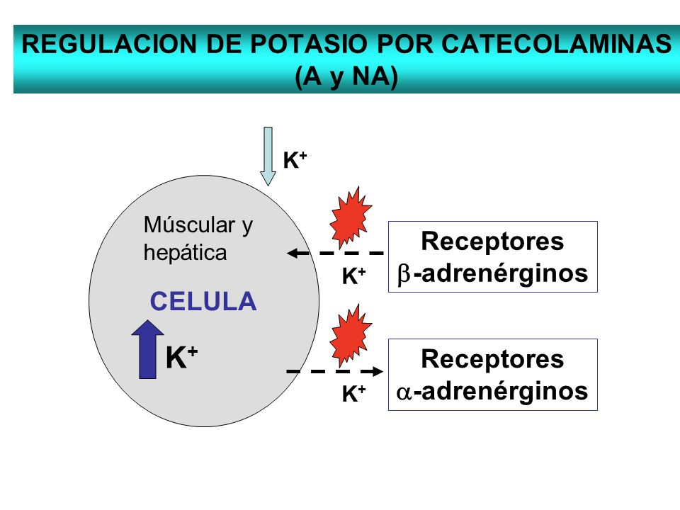 REGULACION DE POTASIO POR CATECOLAMINAS (A y NA)