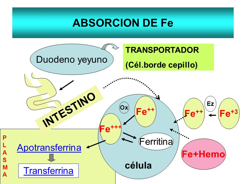 ABSORCION DE Fe INTESTINO