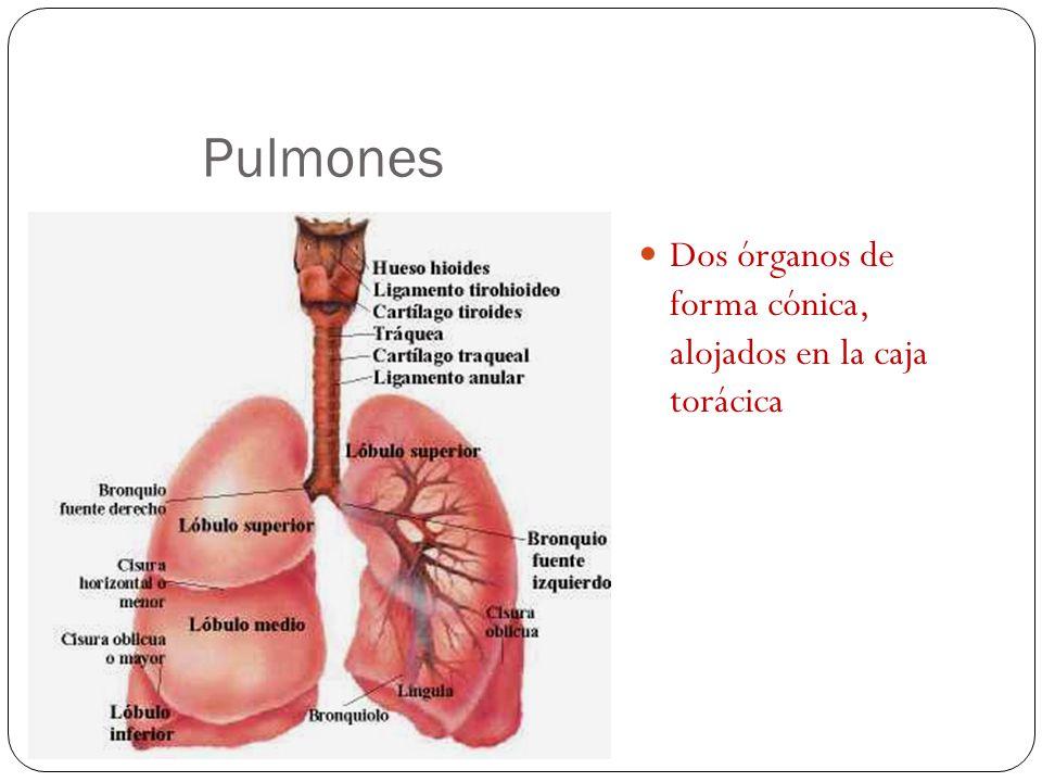 Introducción a Sistemas de Órganos A.- Anatomía de Sistemas - ppt ...