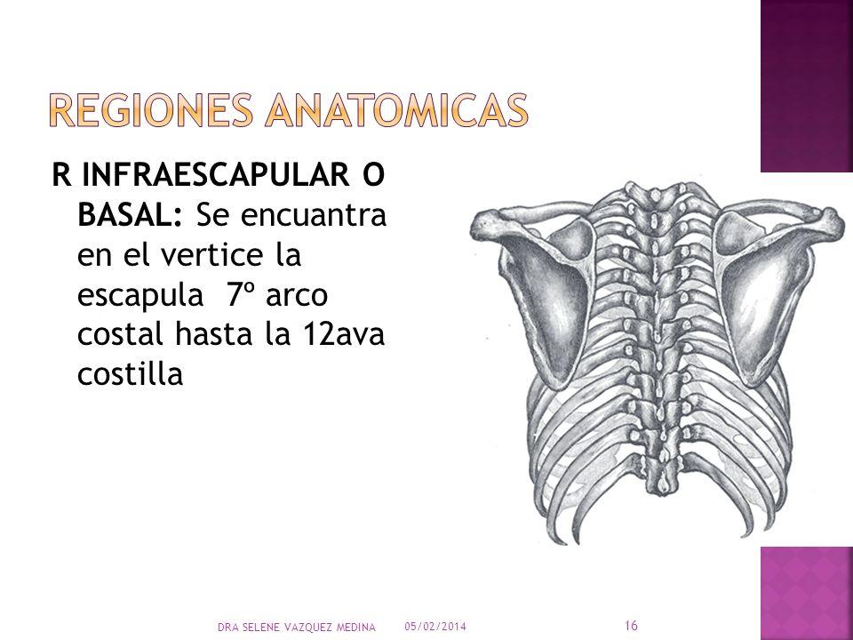ANATOMIA APARATO Respiratorio - ppt video online descargar
