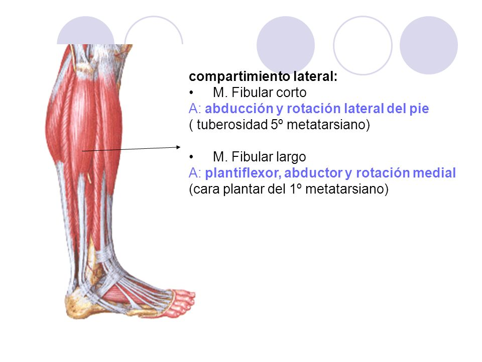 compartimiento lateral:
