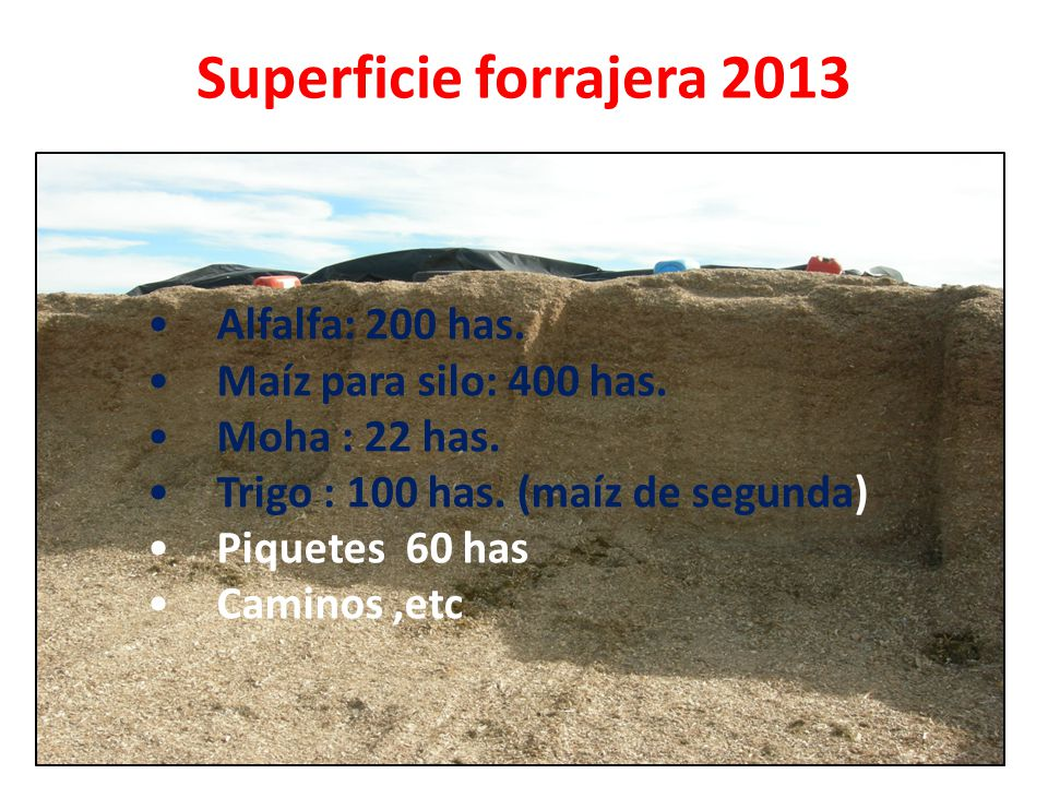Superficie forrajera 2013 Alfalfa: 200 has. Maíz para silo: 400 has.