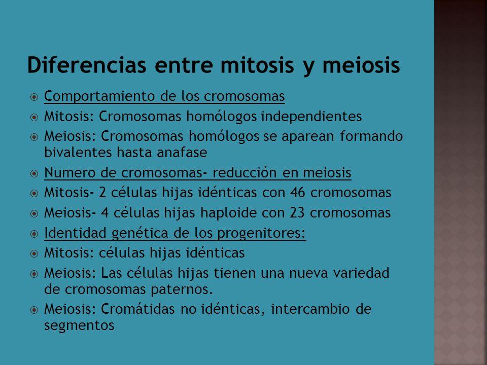 Mitosis Y Meiosis Diferencias Entre La Mitosis Y La Meiosis Ppt