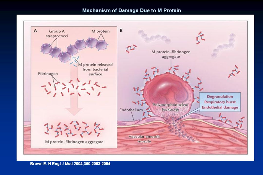 Mechanism of Damage Due to M Protein