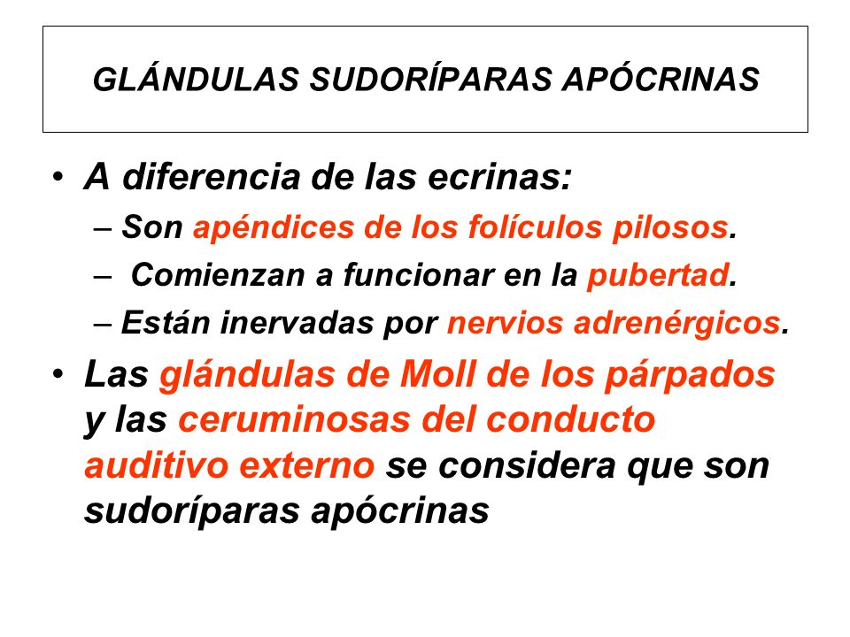 Glándulas Sudoríparas Ecrinas Foliculitis - Dalek