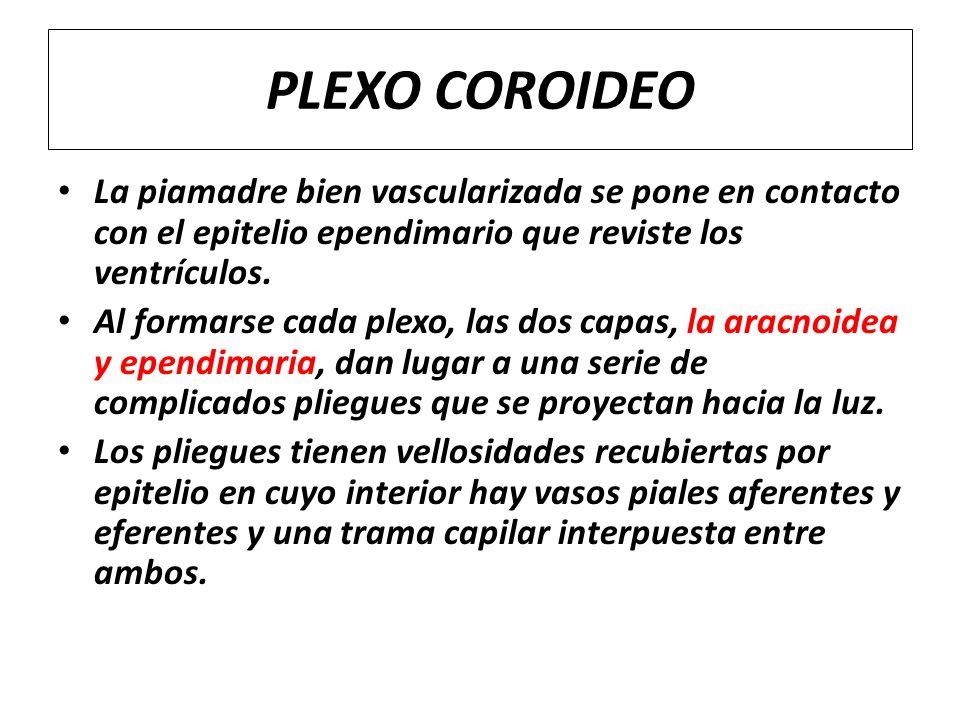 CEREBELO, PLEXOS COROIDEOS Y LIQUIDO CEFALORRAQUIDEO - ppt video ...