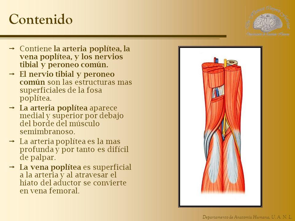 Hermosa Músculos Peroneos Motivo - Anatomía y Fisiología del Cuerpo ...